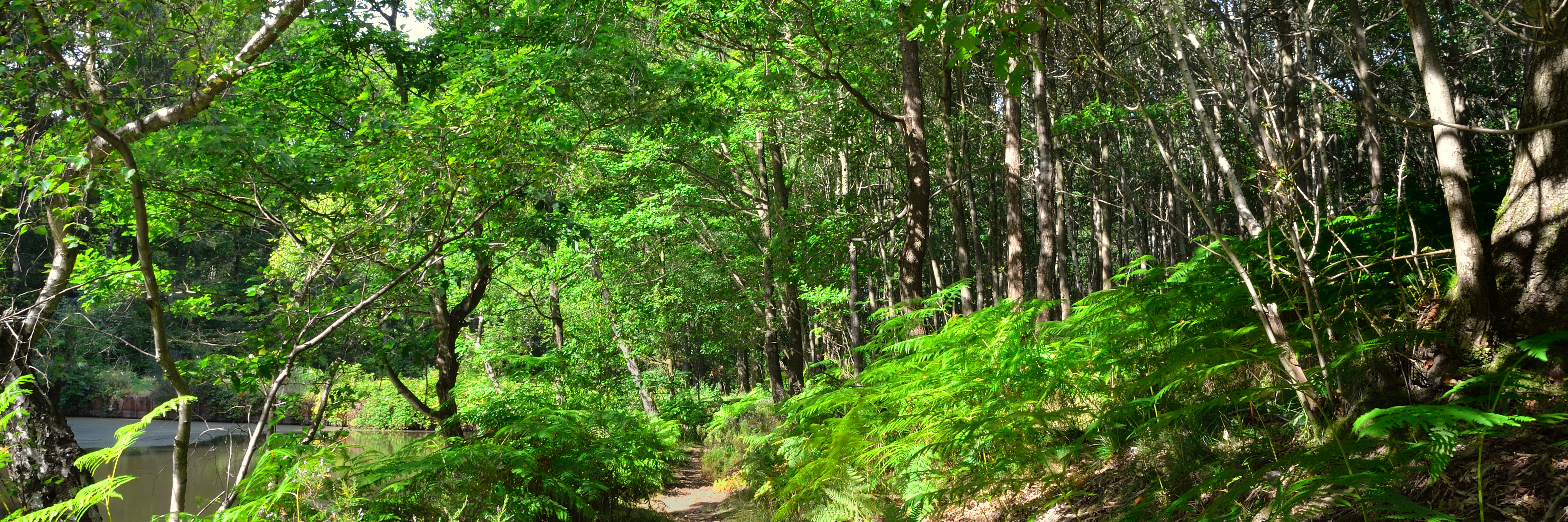 Welcome to the beautiful Wyre Forest!