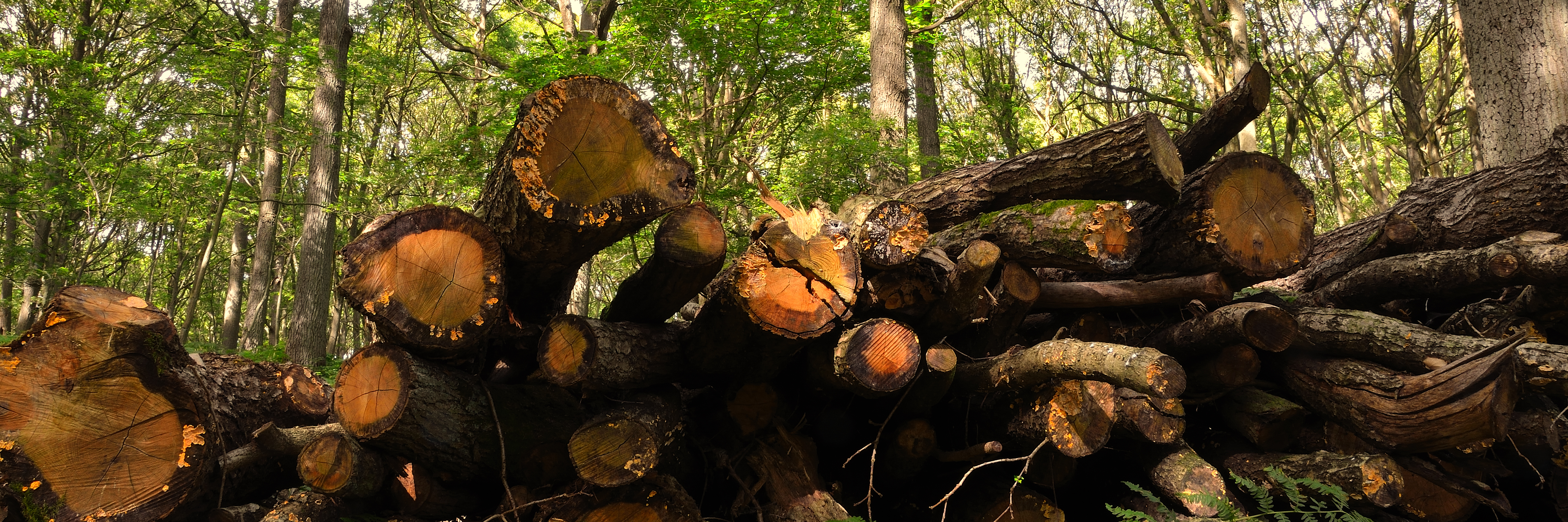 Wyre Forest Woodfuel