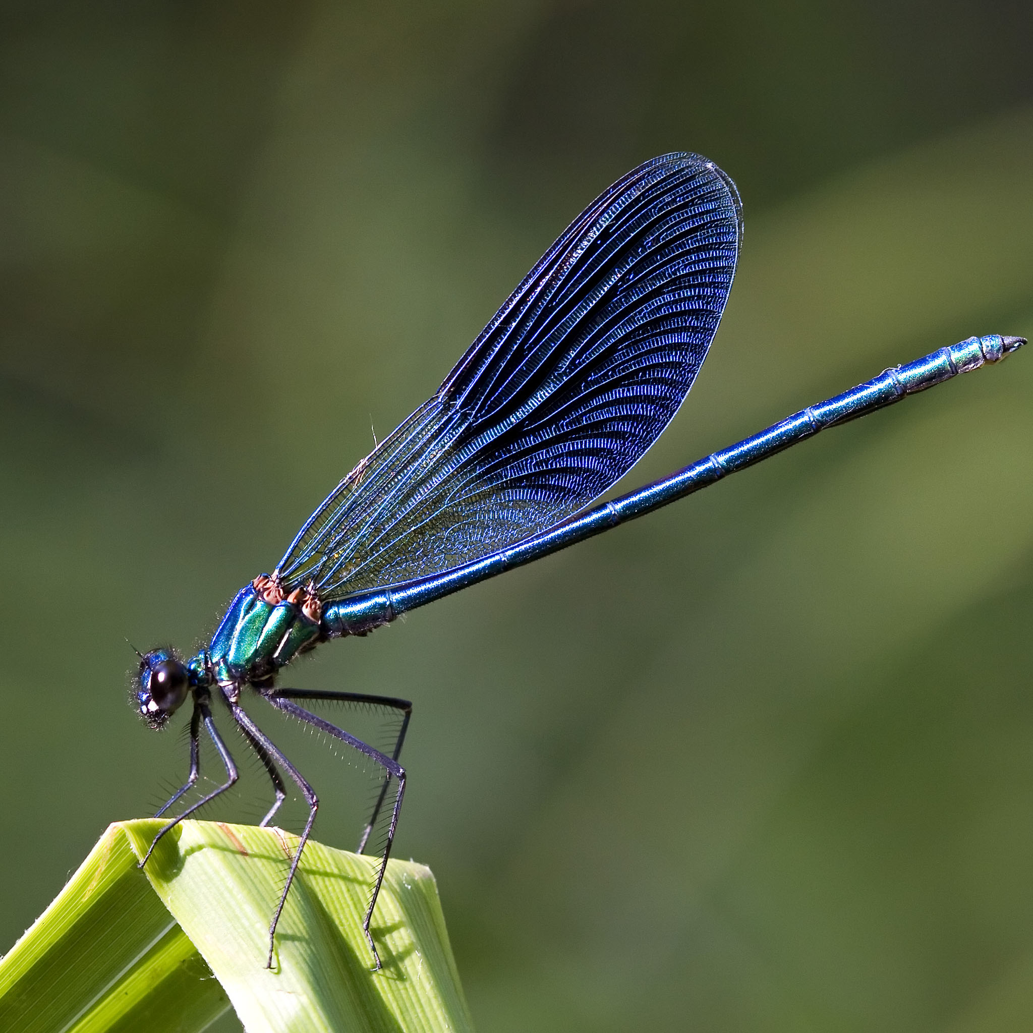 Dragonflies and Damselflies at Lower Smite Farm WWT