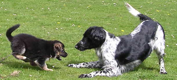 Crumpsbrook Dog Training